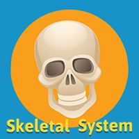 Learn the Skeletal System - A Fun & Interactive Game • ABCya!